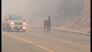 Horse runs for its life in bid to escape California wildfire