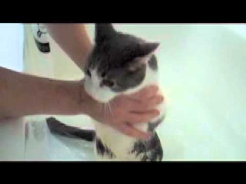 What Animal Sounds Like A Cat Crying