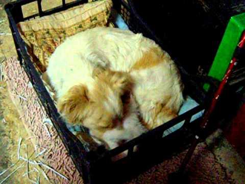 Η τρυφεροτητα της σκυλιτσας Λολλας