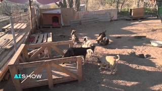 """Reportaj AISHOW: Azilul de câini """"Остров Надежды"""""""