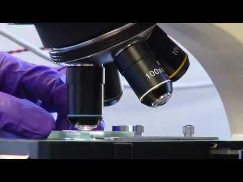 Energy 101 | Biofuels