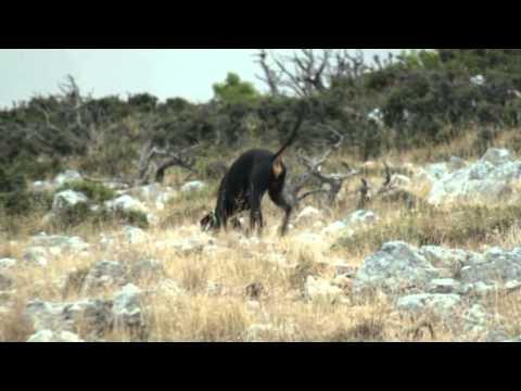 Κυνήγι λαγού- ΝΕΑ ΤΑΙΝΙΑ DVD ΤΟΝ ΑΠΡΙΛΙΟ ΤΟΥ 2013