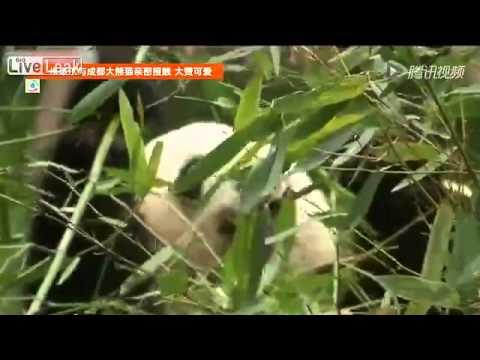Michelle Obama visits panda center