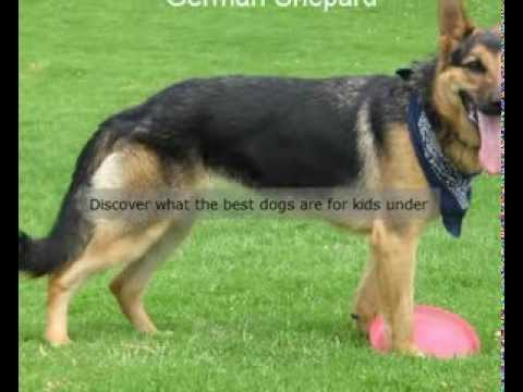 Best Dogs For Kids Pets Revealed Online