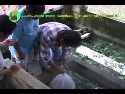 Ornamental FIsh Culture (Breeding & Grow-out)/Palamuting Isda Part 2