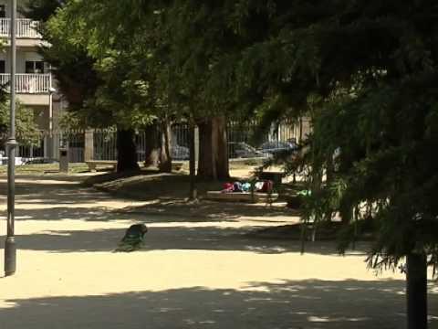 Los pavos reales del jard n de o pos o v ctimas de actos for Jardin del posio ourense