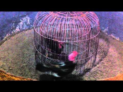 Hình ảnh trong video ga chay long (Anh Minh)