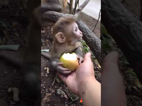 Funny monkey videos