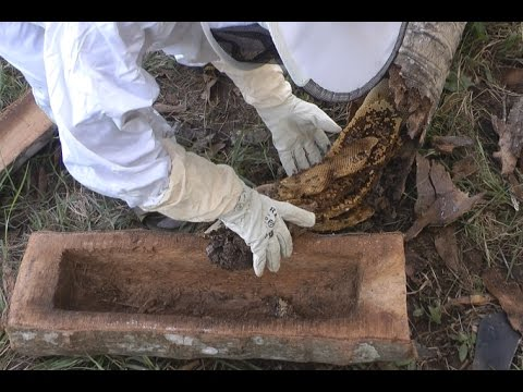 Beekeeping - From Coconut Tree to LOG BEE HIVE!
