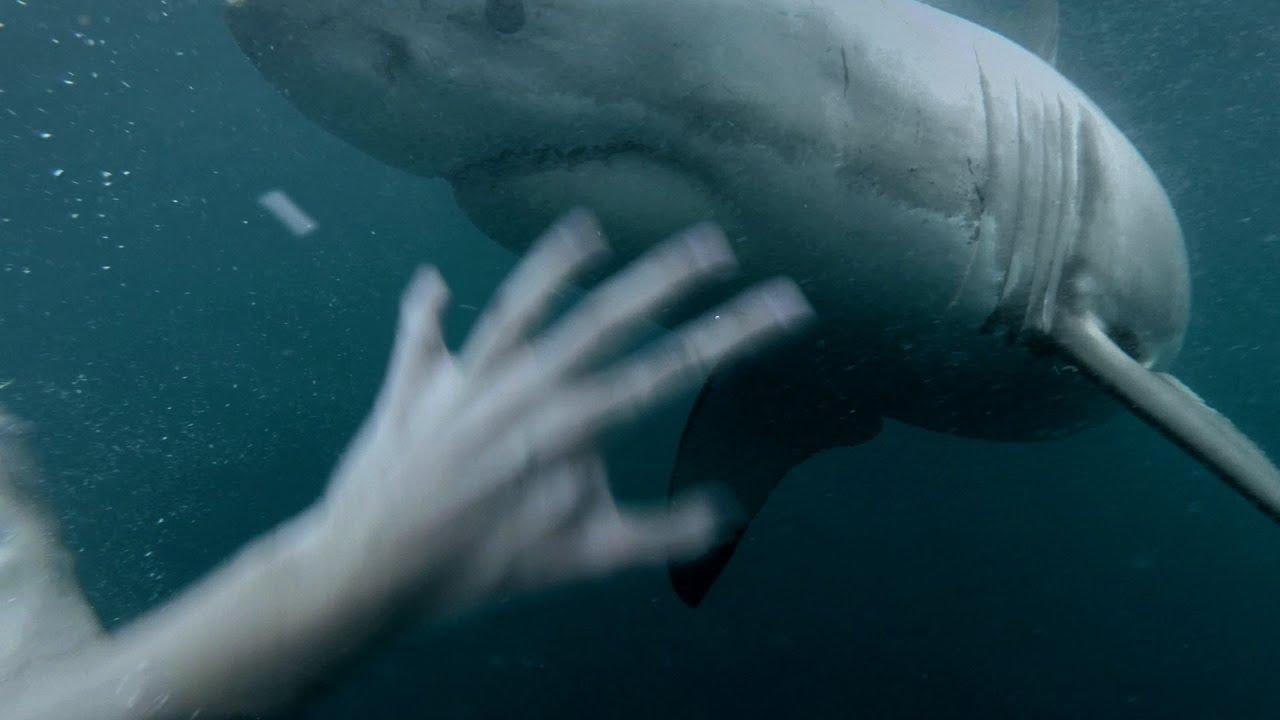Un grand requin blanc vient le saluer après son plongeon