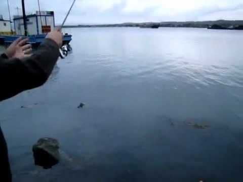 Pescuit la oblete folosind taparina cu muste artificiale 20.10.2011.wmv.mp4