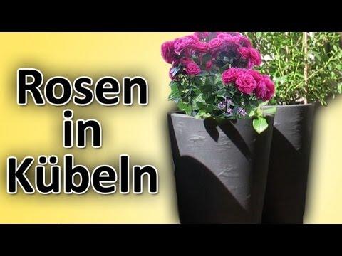 rosen richtig in balkon terrassen k bel blument pfe pflanzen topfen einpflanzen hd anleitung. Black Bedroom Furniture Sets. Home Design Ideas
