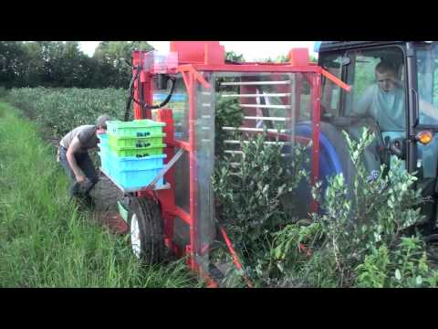 blueberry harvesting machine for sale