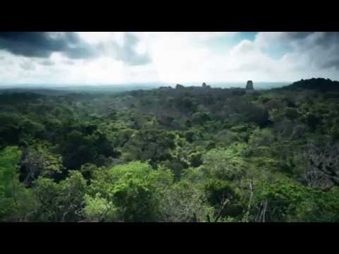 THE RAINFOREST ALLIANCE: CONSERVATION & BIODIVERSITY