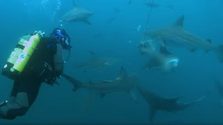 Overboard into Shark Swarm