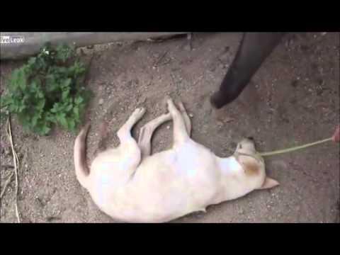Elephant qui tente de réveiller un chien
