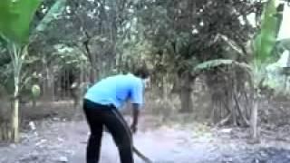 [sneezing animals] Video