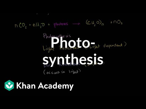 Photosynthesis - KA
