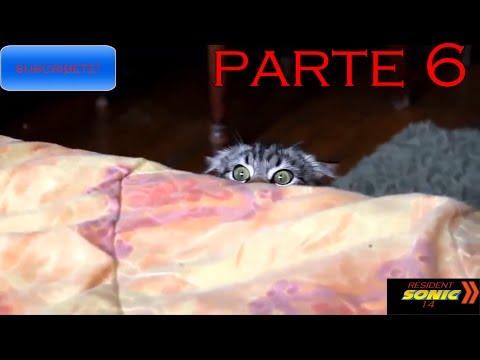 Gatos y Perros Graciosos (Loquendo) Parte 6