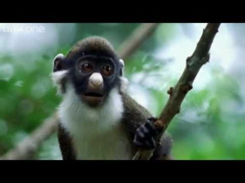 Seandainya Hewan Bisa ngomong, kumpulan video aktifitas hewan dengan Dubbing - Pengisi suara yang lucu, dijamin ngakak den PULSKER ! :)