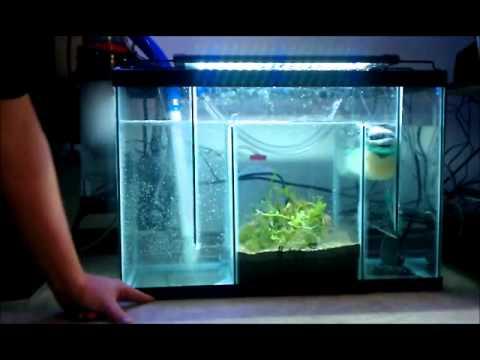 60 Gallon Saltwater Reef Setup With Refugium Youtube