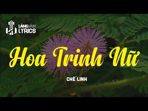 Chế Linh - Hoa Trinh Nữ [OFFICIAL KARAOKE VERSION]