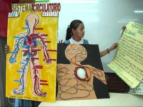 como hacer una maqueta del sistema circulatorio funcional