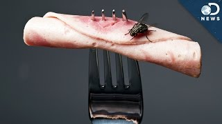 What Happens When A Fly Lands On Your Food?