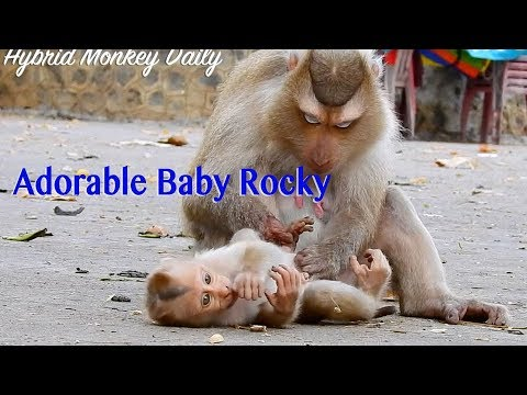 So Sweet Funny Baby Rocky Lay Down On The Cement Floor Let Mama Rozy Grooming So Adorable