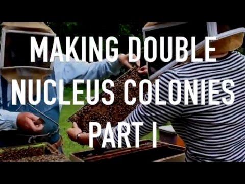 Making Double Nucleus Colonies Part I