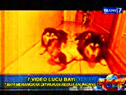 7 video lucu bayi  versi On the spot