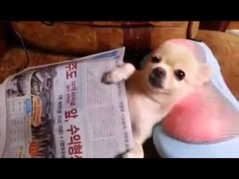 Adorable Cute South Korean Dog Gets Neck Massage