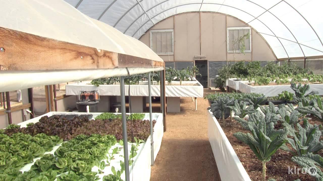 Central Texas Gardener Wicking Beds