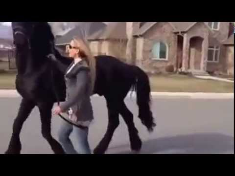 Ngựa và người đẹp