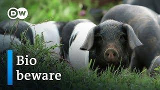 Organic food - hype or hope?   DW Documentary