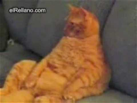 el gato garfield real