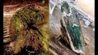 Nhặt khúc gỗ mục nát về làm củi, không ngờ đó là gỗ hóa thạch từ hàng triệu năm trước