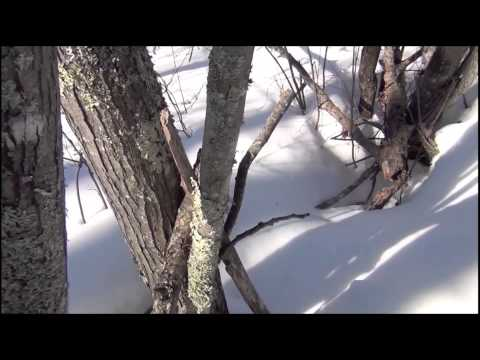Longest Bigfoot trackway 3000 steps Minnesota March 2012 20 minute file