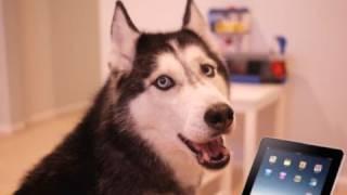 飼い主の犬の鳴き声に合わせて作曲して人気が出た動画