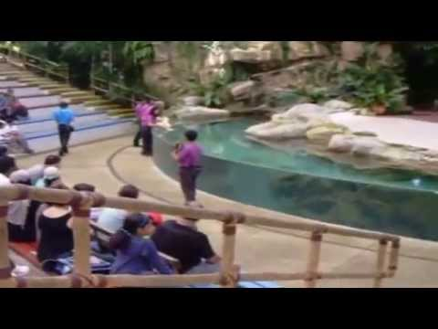Singapore Zoo Primate Kingdom show with huge snakes