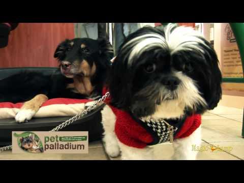 Pet Palladium | Pet Shop Παλαιό Φάληρο,Τροφές,Αξεσουάρ,Φύλαξη,Εκπαίδευση,Κομμωτήριο