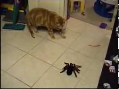 Spider vs  Mr. Bill, Mr. Bill battles the REMOTE CONTROLLED tarantula.