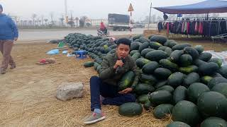 Bất ngờ cậu bé  bán dưa ca bolero làm người nghe mê mẩn_ hai ca nhạc Nguyễn vịnh