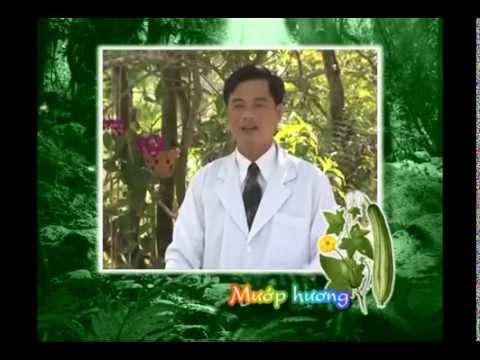 Nhiều Công dụng chữa bệnh từ quả Mướp- Ngôi Sao TV