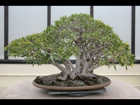 National Bonsai Conservatory Walkthrough