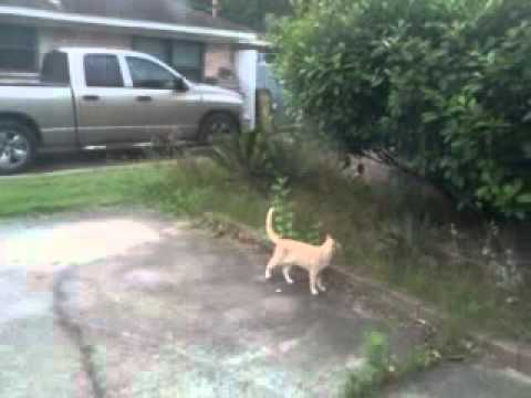 Bird Attacks Cat - Epic Fail