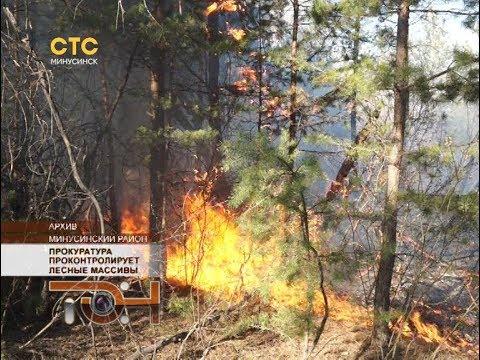 Прокуратура проконтролирует лесные массивы