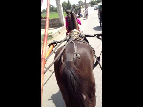 Horse Riding Village Barazai video 3