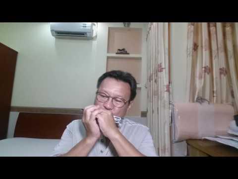 中国恰恰 ( CON BƯỚM XUÂN ) - Hòa tấu Harmonica ( Phối Remix ) .