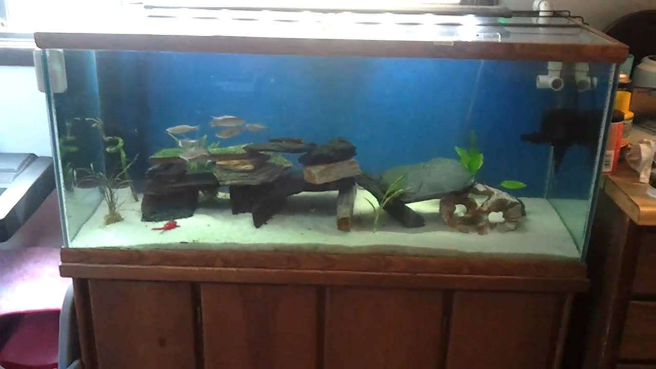 75 gallon freshwater aquarium youtube for 75 gallon fish tank dimensions